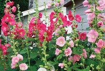 Perennials Full Sun