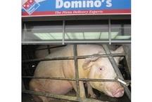 Stop Animal Suffering