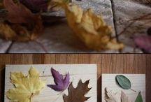 feuilles arbres