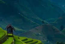 vietnam rice terrace