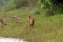 Wildlife Tours to India