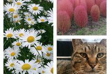 Flowers / 庭の花(&他)の写真を集めてみました
