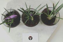flowers / deko, pflanzen, Blumen, home, living, accessoires, food&furniture
