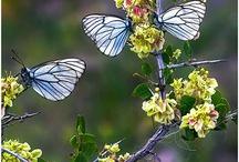 Aves e borboletas!