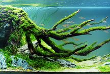 Aquariums / A bit of beautiful underwater world