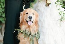 4 Legged Friends on your Wedding Day