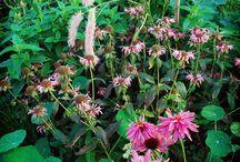 Venkel & Vlier garden design / Venkel & Vlier is the Garden design studio of Silvia Dekker. New website coming soon...