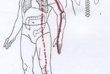 Orgánová soustava-cviky