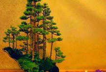 ikebana et bonsai