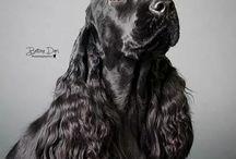 Bijuterii canine