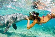 My love sea