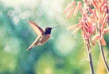 bird love / by leah *sangthebird