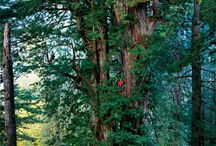 Glorious trees / Amazing pictures of great trees from around the world