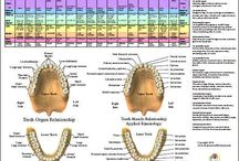 Teeth Remedies and Charts