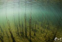 Lacs du Jura / Plongée hivernale dans les eaux douces du Jura - Décembre 2014 -  suite des clichés dans la galerie de www.refletsdeaudouce.fr