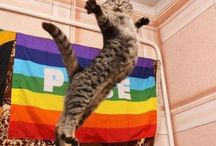 Cat Pride! / by Manhattan Cat Specialists