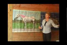 Equine Training, Health & Veterinary Resources / by Holly Manns