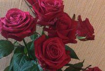 Life&roses