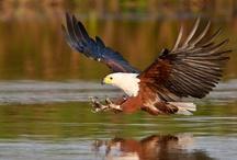 Stanford Birdlife