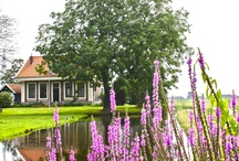 I love Holland.