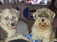 Honden / Onze honden