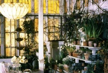 Conservatories, greenhouses / by Annie Murphy