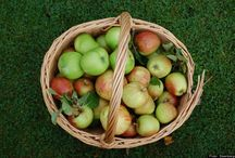 Apples to Apples / Fall's best treat is the apple. Celebrate at Lincoln Square's Apple Fest on September 20, 2014. We'll have our famous homemade Apple Pie by the slice and whole pie.