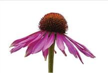 Flowers, Plants & Gardening