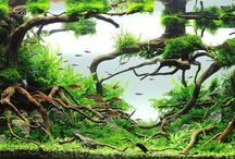 Aquascaping / Visit my blog http://aquascaper.romanholba.cz or facebook page https://www.facebook.com/akvariumromanholba