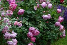Czudkovi - zahrada