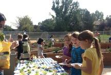 Whole Kids School Gardens