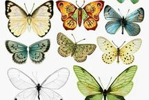 Fugler, sommerfugler
