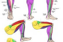 Anatomy legs
