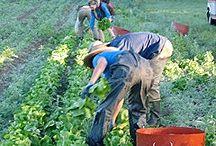 organic Farming / by Dorita