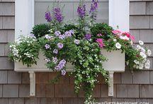 jardinière fenêtre
