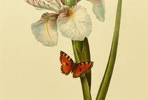 botanical prind