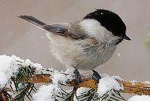 Doğa Ve (Kış S.Yaz) Muhteşem Kareler