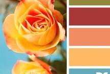 Color Schemes  / by Stephanie Barbour
