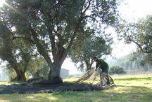 Finca y huerto ecológico