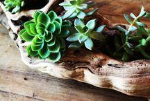 Növények, csokrok