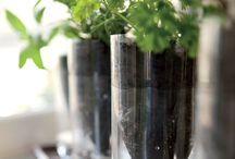 Planting idea