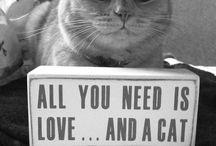 Cats always get it