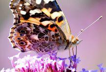 Butterfly Gardens / Create a garden that will attract beautiful butterflies!