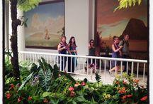 2013 Elite V Trip - Maui / 2013 Rodan + Fields Elite V Achievers enjoying a week in paradise at the Fairmont Kea Lani in Maui, Hawaii. / by Rodan + Fields