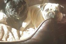 Lulu & Maya & Molly
