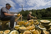 Slovenia / We grow our pumpkins in the beautiful country of Slovenia, an undiscovered gem.