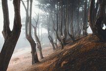 Сказочный лес/Fairy forest