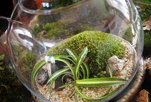 ZEN  miniature moss garden