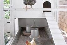 chickens! / by Susan Wuest