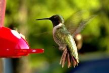 bird watching / by Paula Bryant
